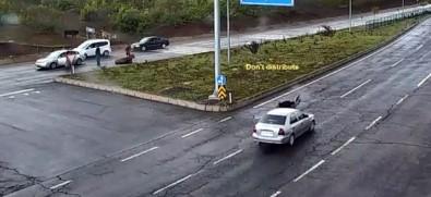 Araba çarpan hayvanlarına koşarken...