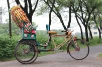 SRI LANKA - Bangladeş'in Yüz Yıllık Geleneksek Aracı Çekçek