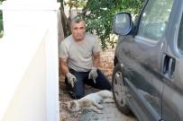 KAYALı - İzmir'deki Köpeklerde Gençlik Hastalığı Salgını