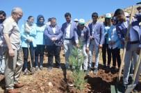 ORHAN MIROĞLU - Mardin'de 15 Temmuz Şehitleri İçin Fidan Dikildi