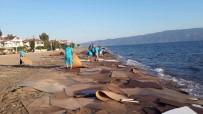 MOLDOVA - O Gemi, Gerekli Teminatlar Alındıktan Sonra Serbest Bırakılacak