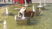 TAKSIM - Taksim'de Sıcaktan Bunalan Köpeğin Köpeğin Fıskiye İle İmtihanı