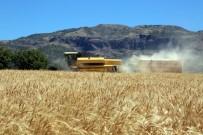 GÜBRE - Tunceli'de İlk Defa Ayyıldız Buğdayının Hasadı Yapıldı