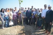 TUGAY KOMUTANI - 250 Fidan, 15 Temmuz Şehitlerinin Anısına Toprakla Buluştu