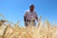 TOPRAK MAHSULLERI OFISI - Arpa Hasadı Çiftçinin Yüzünü Güldürüyor