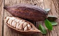 CİLT BAKIMI - 'Bronzluk İçin Kullanılan Kakao Yağı Aslında Her Mevsim Kullanılmalı'