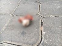 GENÇ KIZ - İzmir'deki Kedi Vahşeti Görüntüleri Kan Dondurdu