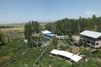 ALABALIK - Malazgirt'teki Alabalık Tesisleri Büyük İlgi Görüyor