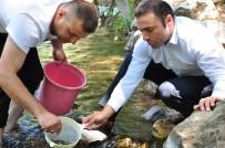ALI HAYDAR - Nergele Çayı'na 7 Bin Kırmızı Benekli Alabalık Yavrusu Bırakıldı