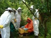 VEYSEL EROĞLU - Orman Köylüsüne 33 Milyon 300 Bin Liralık Destek Verildi