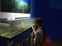 BIYOLOJI - Aslan Ve Papağan Balıkları Deniz Biyolojisi Müzesi'nde