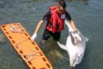 AHıRKAPı - Kıyıya Vuran Yaralı Yunusu Kurtarma Çabası Kamerada