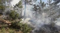 KıRKA - Seyitgazi'de Orman Yangını
