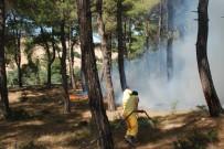 SİGARA İZMARİTİ - Bayramiç'te Orman Yangını