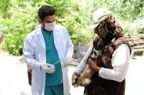 EVCİL HAYVAN - Mamak'ta 500 Evcil Hayvan Aşılandı