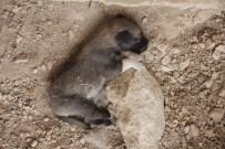 KANGAL KÖPEĞİ - Anadolu Aslanına Soğuk Duş