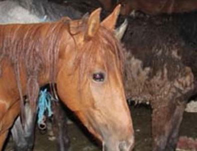 Avrupa bu haberle çalkalanıyor! 'At eti' skandalı…