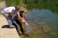 MERSIN - Aydın'da 110 Bin Sazan Yavrusu Tatlı Sularla Buluştu