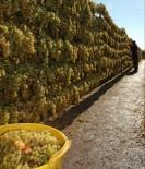 İHRACATÇILAR - İyi Tarım Uygulamalarıyla Kuru Üzümde Okratoksin Tehdidi Aşılacak