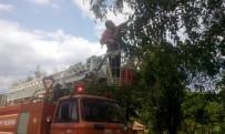 YAVRU KEDİ - Kastamonu'da Ağaçta Mahsur Kalan Kediyi İtfaiye Kurtardı