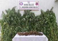 KARAOĞLAN - Sazlıklarda 330 Bin Liralık Uyuşturucu Ele Geçirildi