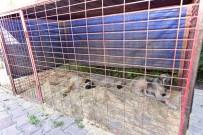 MURAT ŞAHIN - Sokak Hayvanları Çiple Takip Altında Olacak