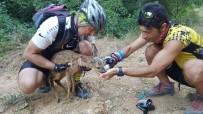EDİRNE - Bisiklet Sürücüleri Yaralı Karacaya Can Oldu