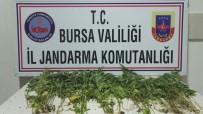 ORMANA - Bursa'da Uyuşturucu Operasyonu