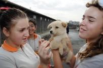 KORUYUCU HEKİMLİK - Büyükşehir'den Sertifikalı Pet Shop Eğitimi