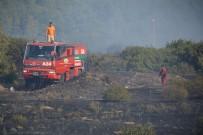 ZEYTİN AĞACI - İzmir'de Makilik Alanda Yangın