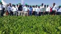 KAYSERİ ŞEKER FABRİKASI - Kayseri Şeker'den Şeker Sektöründe İlk Demonstrasyon Günü Uygulaması