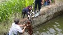 Su Kuyusuna Düşen Karaca İtfaiye Ekipleri Tarafından Kurtarıldı