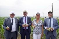 SERBEST PIYASA - Yerli Tohumla Küçük Üretici Destekleniyor, Ürün Fiyatları İndiriliyor
