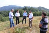 HASAN KESKIN - Yığılca'da Balköy Bal Üretim Ormanı Kuruluyor