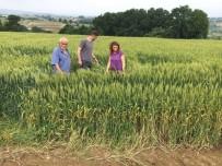 MıSıR - Büyükşehir'in Yem Bitkisi Destekleri İle Verimler Arttı