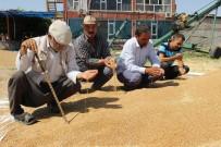 GÜBRE - Çiftçi, Buğday Fiyatlarının Düzeltilmesini İstiyor
