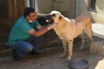 ÇOBAN KÖPEĞİ - Felçli Sokak Köpeği Hayvan Barınağında Sağlığına Kavuştu