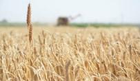 GIDA SEKTÖRÜ - Gıda Üretiminin Sürdürülebilirliği İçin Köyden Kente Göç Önlenmeli