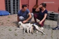 SEVINDIK - Köpekten İnsanlık Dersi
