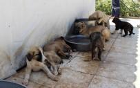 HAYVANLARI KORUMA DERNEĞİ - Barınaktaki Hayvanlar Suyla Serinletiliyor