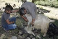 MUSTAFA GÖKÇE - Çobanlar Sıcaktan Etkilenen Hayvanları Kırkarak Suya Sokuyor