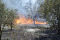 ZEYTINLIK - Yangında Zeytin Ağaçları Zarar Gördü
