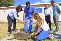BAKIM MERKEZİ - 2 Deniz Kaplumbağası Denize Geri Döndü