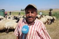 HAYVAN - Çiftçilerin Mobil Koyun Banyoluğu Sevinci