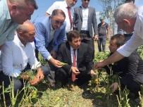 BURSA VALISI - Çiftçinin Zararı En Kısa Sürede Karşılanacak