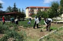 MEHMET GÜVEN - Huzurevi Sakinleri Hobi Bahçesinde Doğal Ürün Yetiştiriyor