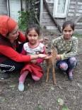 İki Kız Kardeş Yavru Karacayı Köpeklerin Elinden Aldı
