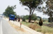 FUHUŞ - Jandarma yol kenarındaki rezalete el koydu