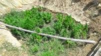 Karaman'da Jandarmadan Kenevir Operasyonu