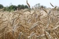 EKOLOJIK - Kent Bostanları Buğday Ambarı Gibi